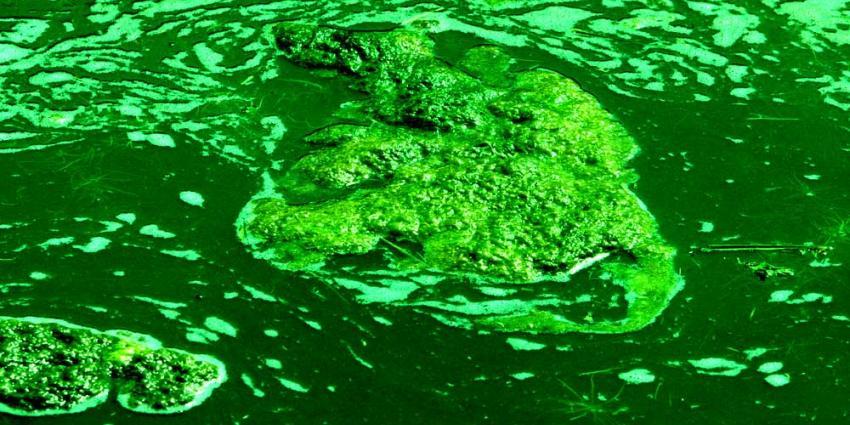Negatief zwemadvies voor Radioplas en Put de Omloop