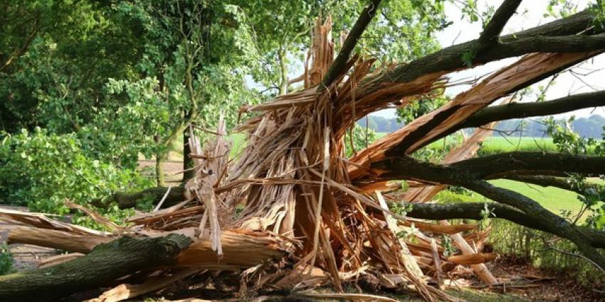 Pittige onweersbuien hebben gevolgen voor treinverkeer, woonboerderijen en bomen