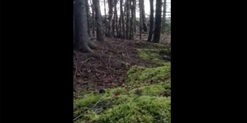 Man filmt 'ademende' bodem in bos met zijn telefoon