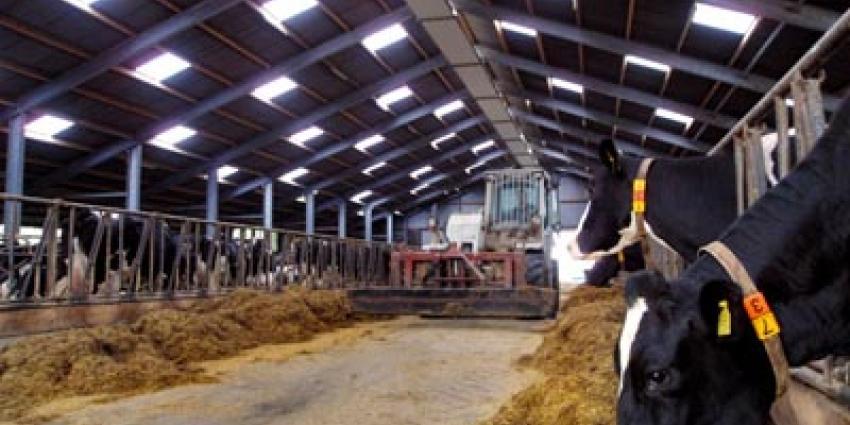 Minder melkvee en droge zomer drukken landbouwinkomsten