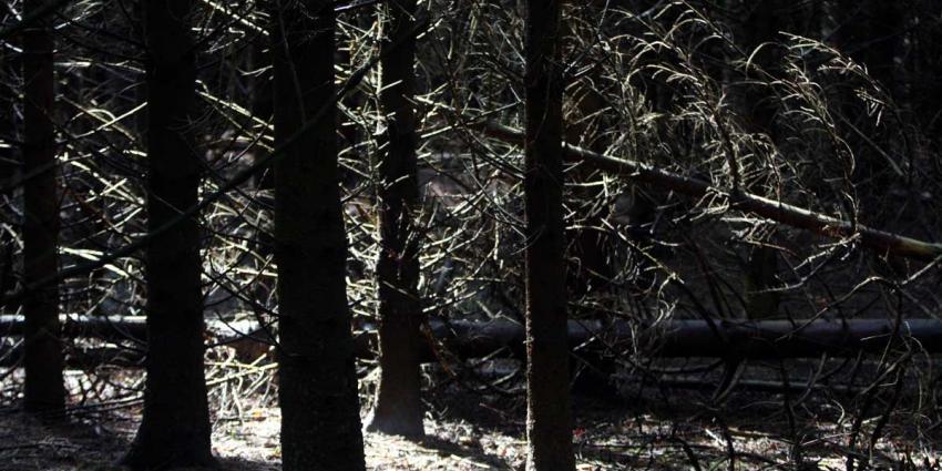 Mijd de bossen dit weekend vanwege stormschade