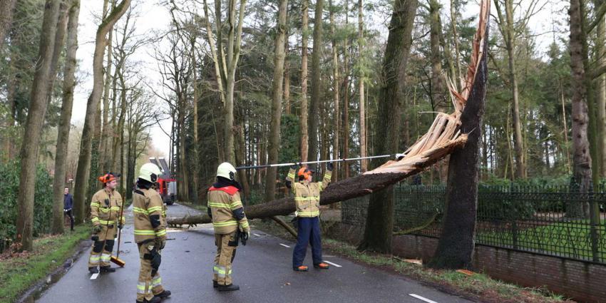 boom-afgebroken