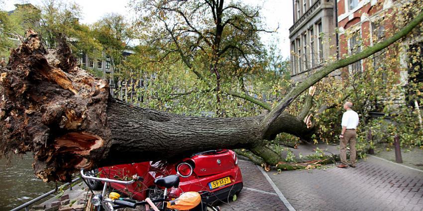 Foto van boom op auto Amsterdam | BON