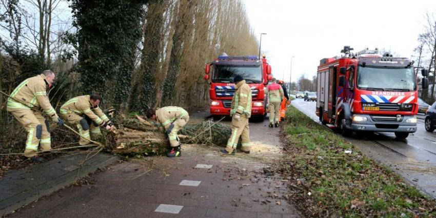 Omver gevallen boom verspert fietspad Vlaardingen