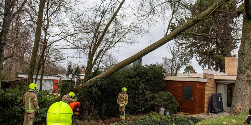 Woning 'ontsnapt' aan omgewaaide boom