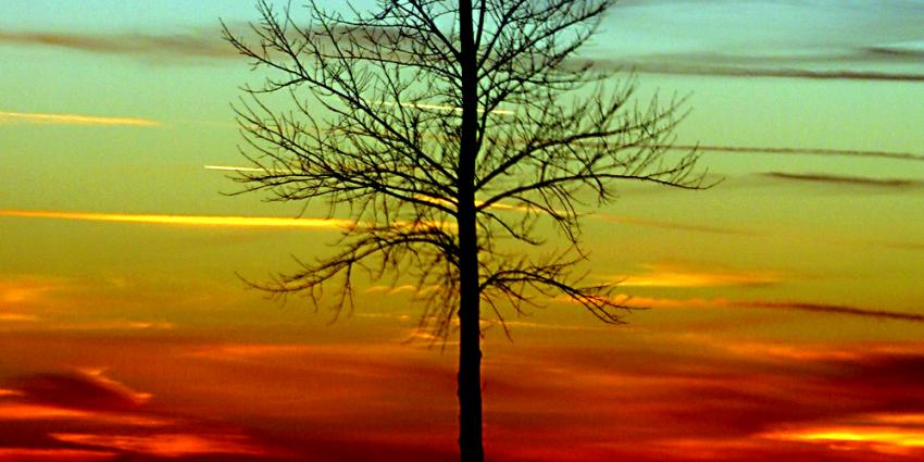 Foto van boom zon tegenlicht | Archief EHF