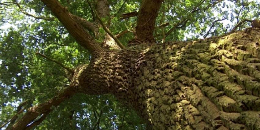 foto van boom | fbf