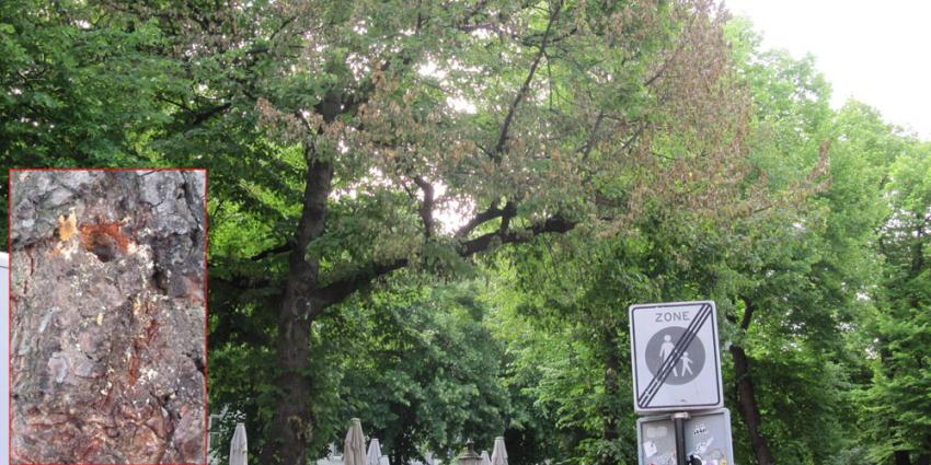 foto van boom vergiftiging | Gem. Maastricht