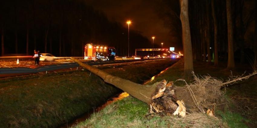 Snelweg A2 tussen Liempde en Best dicht na omgewaaide boom