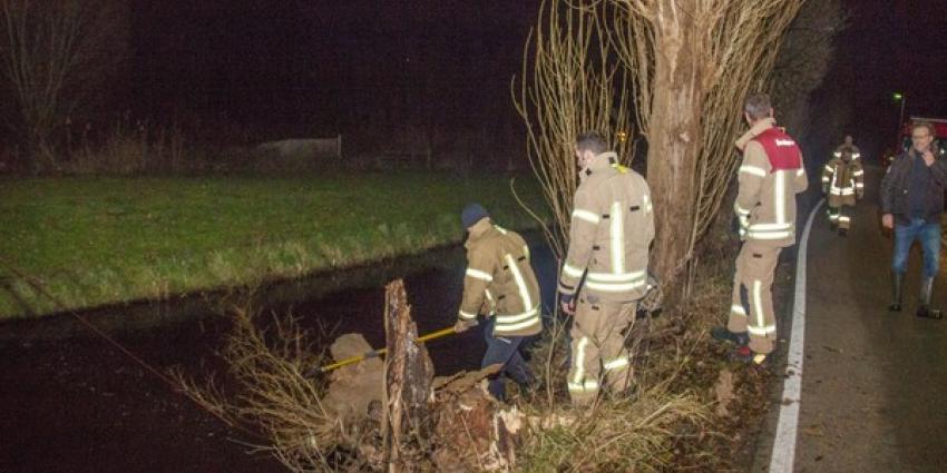 Brandweer laat boom gecontroleerd omvallen