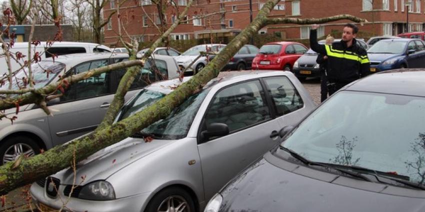 Boom valt op auto