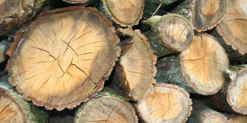 53 ton aan boomstammen gestolen