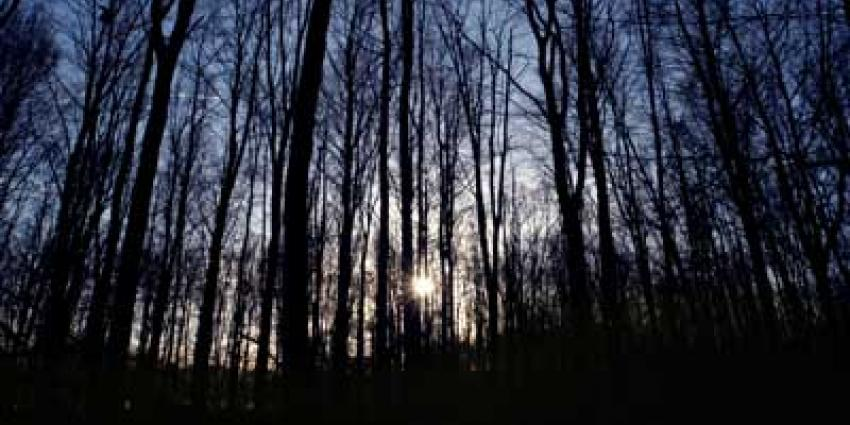 Foto van bos bomen avond | Archief EHF
