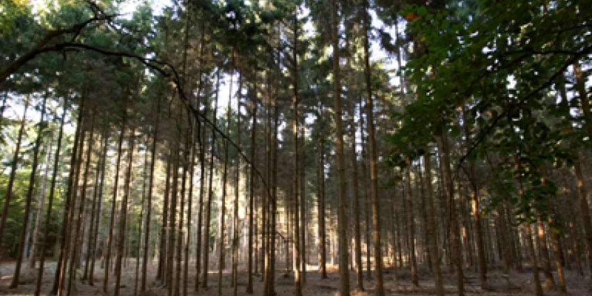 Wolf zondag gezien in Drentse bossen