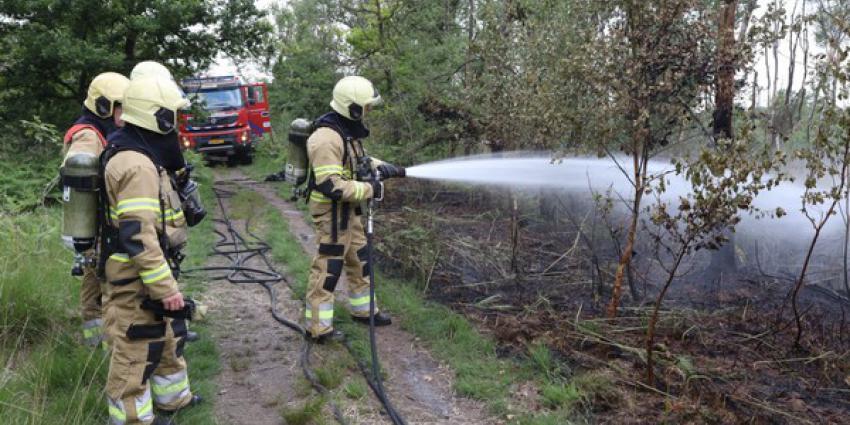 brand, bosgebied, oisterwijk