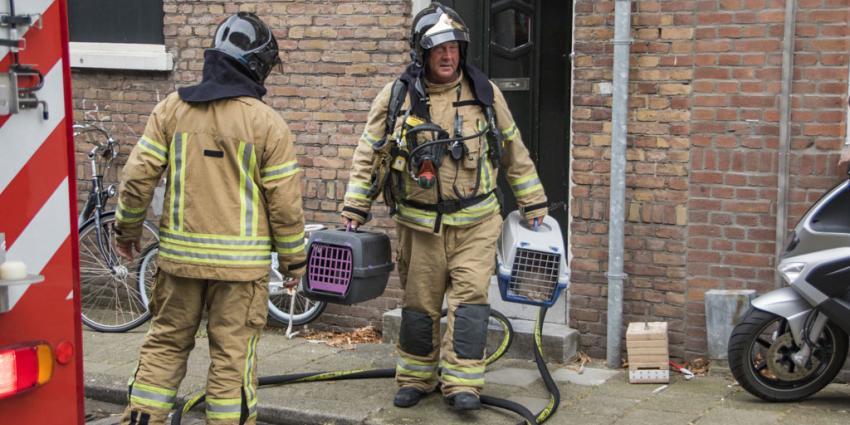 Brandweer redt katten bij woningbrand in Schiedam