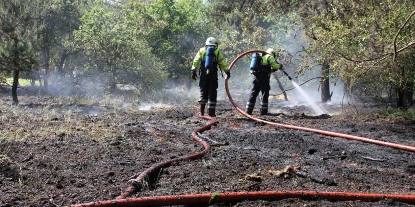 Grote natuurbrand in Limburgs natuurgebied Reindersmeer