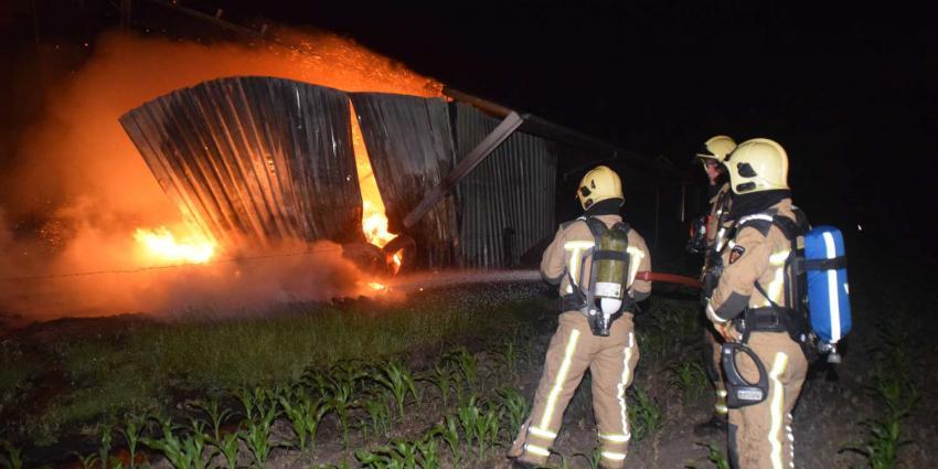 49 kalfjes gered bij grote brand in Dwingeloo