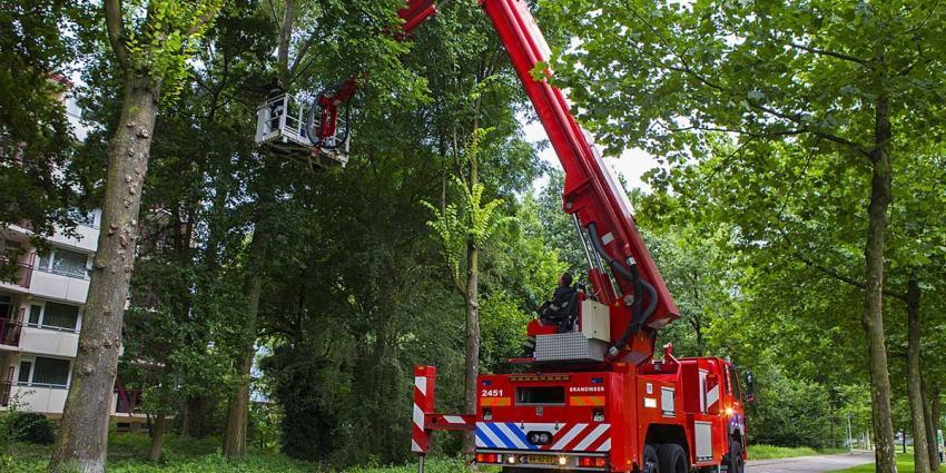 Brandweer redt kat uit boom Leemkuilenpark Best