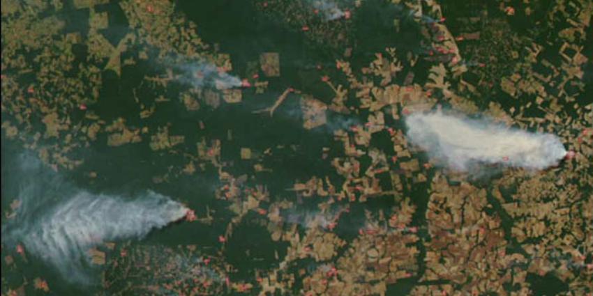bosbrand Amazone