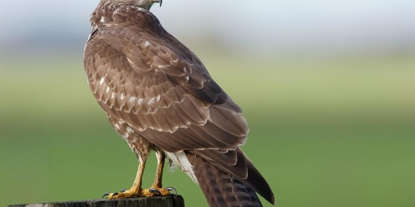 Roofvogels in beslag genomen