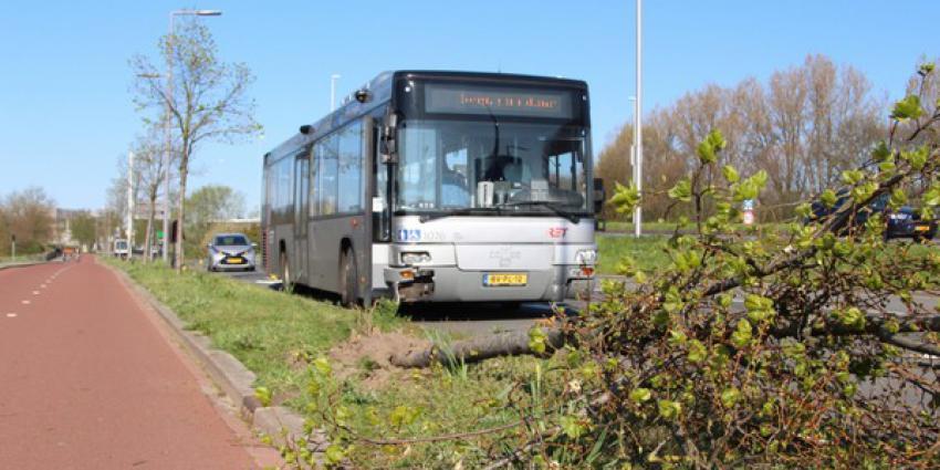 bus, botsen, boom, aanval, passagier
