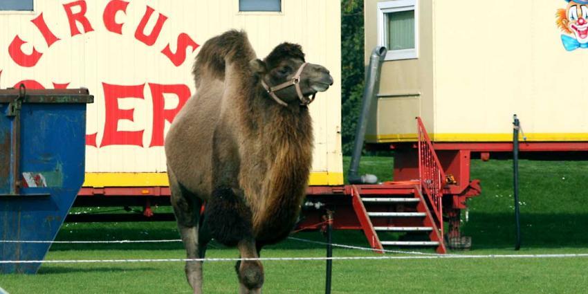 Circus Herman Renz wordt geen deel van erfgoedbeleid Noord-Brabant