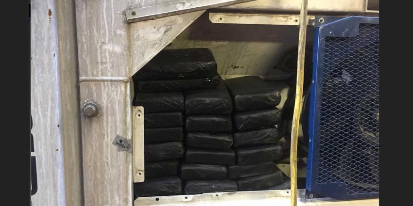 Douane vindt 62 kilo cocaïne in koelcontainer tussen coquilles en bananen