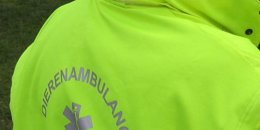 Vrijwilliger (71) stal geld voor dierenambulance Doetinchem
