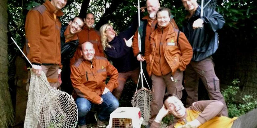 Ontsnapte kleine rode panda Diergaarde Blijdorp weer terecht