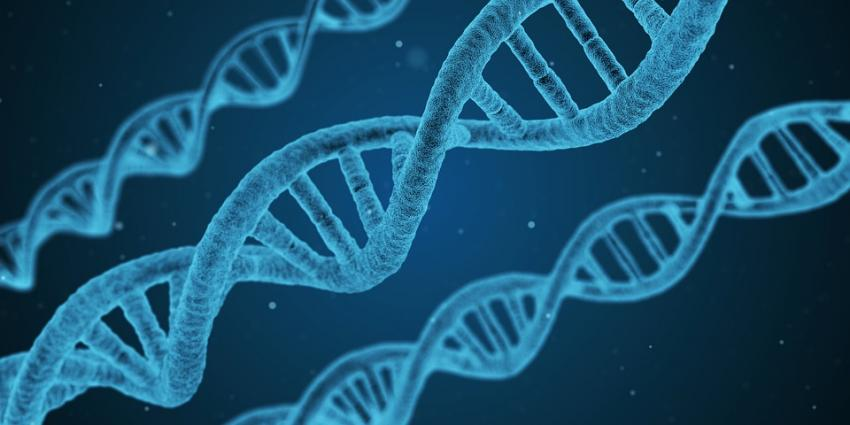 Afstelling genen verschilt tussen hoger- en lager opgeleide Nederlanders