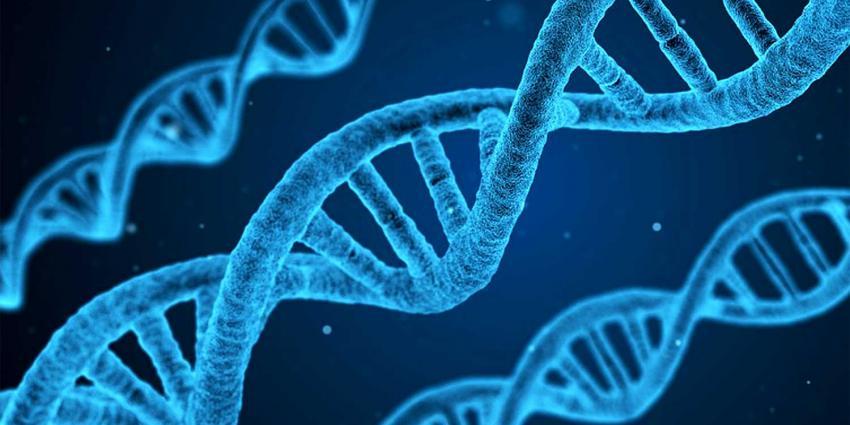 VKGN: 'Commerciële aanbieder DNA-test verkoopt schijnveiligheid'