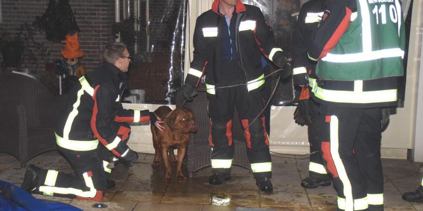 Brandweer redt hond uit zwembad in Tiendeveen