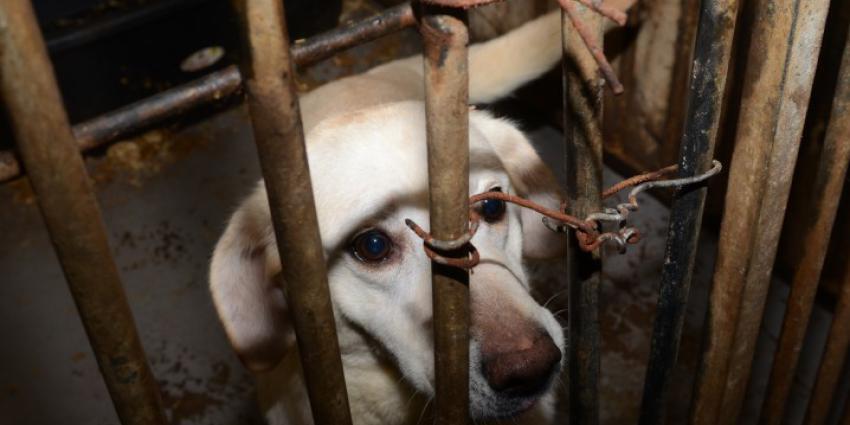 Honderd honden weggehaald bij broodfokker