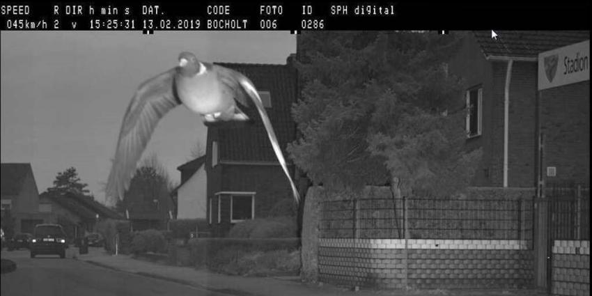 Duif vliegt langs flitspaal