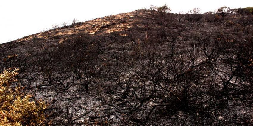 Grote brand in duinen bij Zandvoort