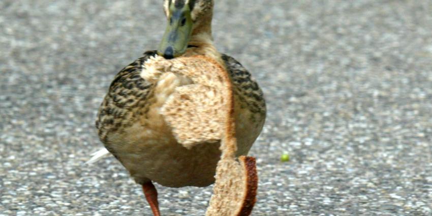 Automobilist rijdt opzettelijk eenden aan