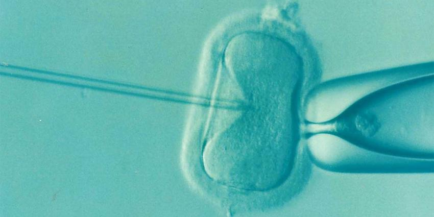 eicel-bevruchting-ivf