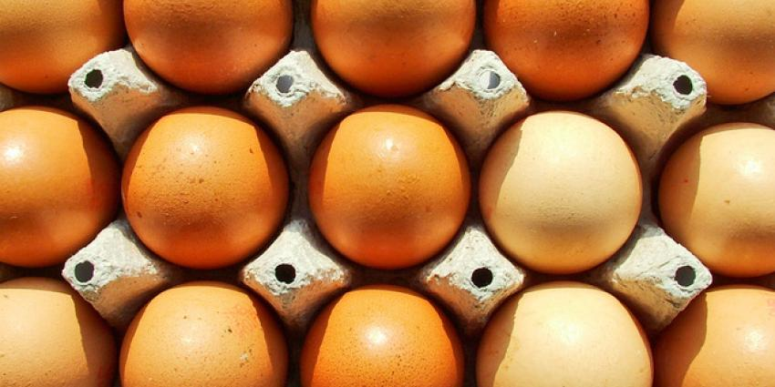 Poolse eieren besmet met Salmonella Enteritidis
