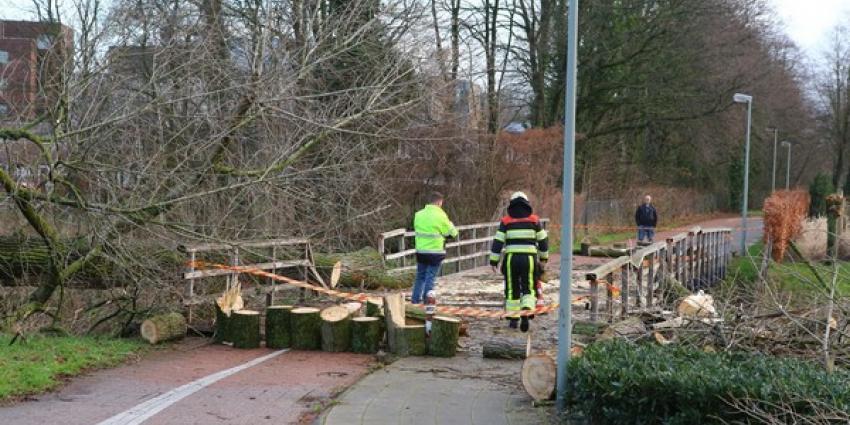 Omgewaaide boom vernielt fietsbrug in Boxtel