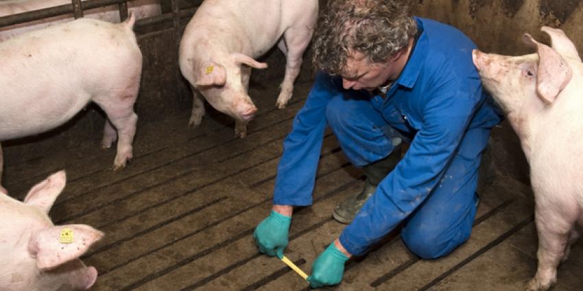 nvwa, dwingen, notoire overtreders dierenwelzijn, aanpassen,bedrijfsvoering