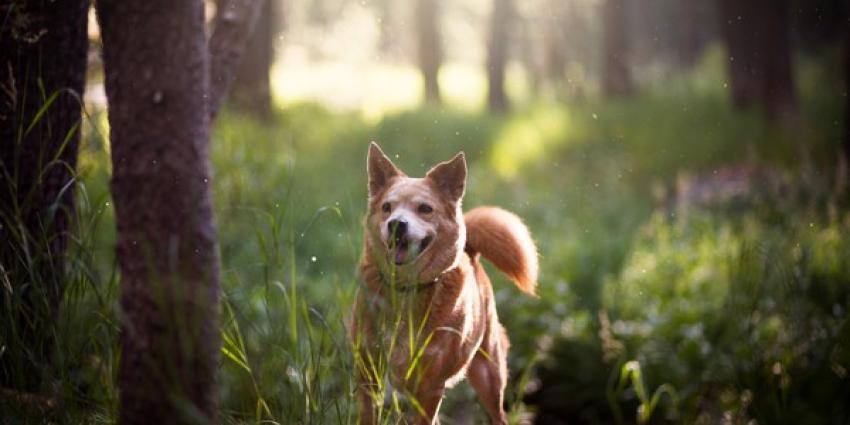 Helft vrouwen ziet hond als hun kind