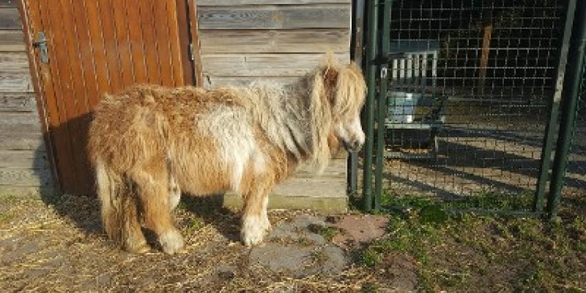 Verwaarloosde pony's aangetroffen door dierenpolitie
