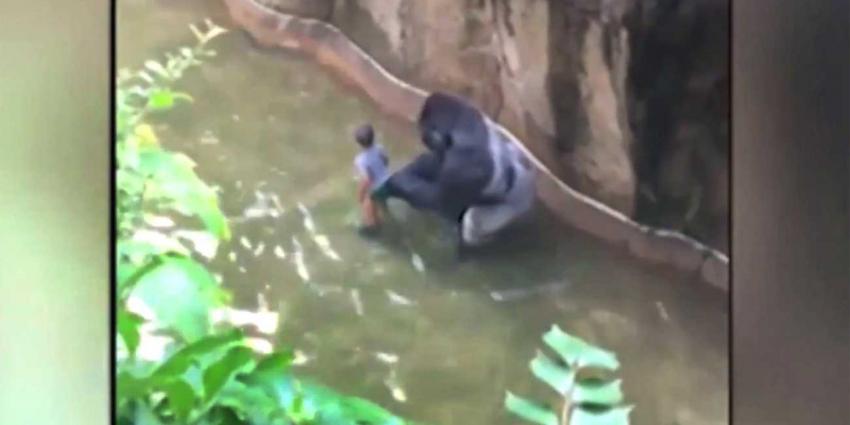 Kind (4) valt in gorillaverblijf, gorilla doodgeschoten