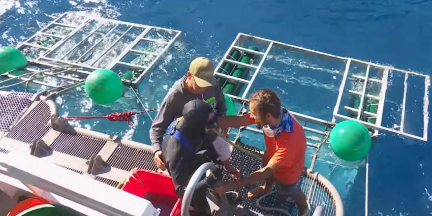 'Jaws' raakt in veiligheidskooi met duiker