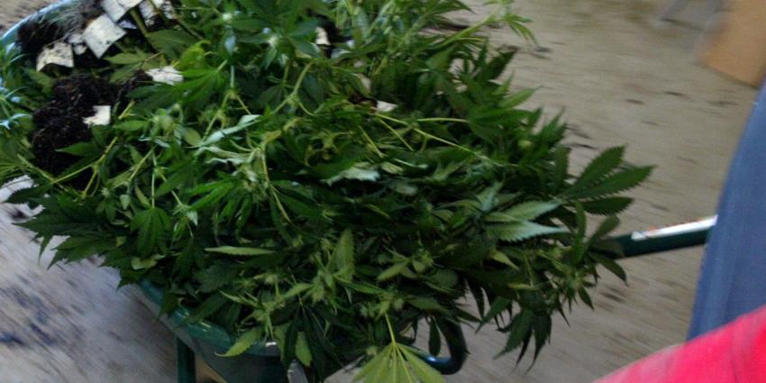 Politiemedewerkster aangehouden voor hennepplantage in Maarssen