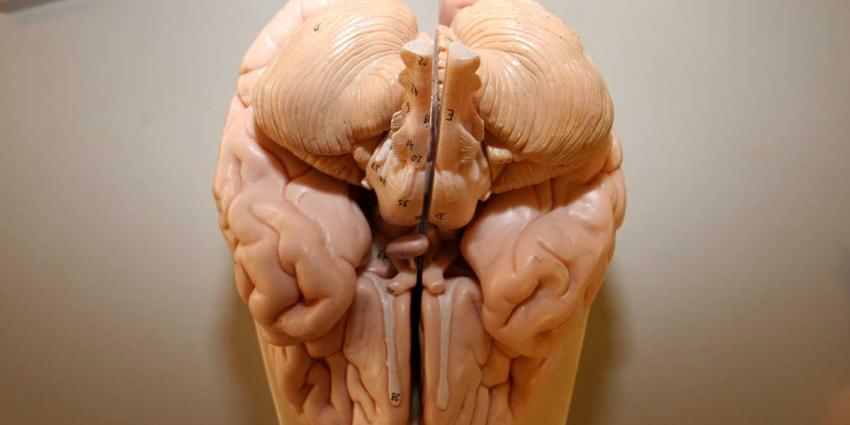 Cognitieve achteruitgang na hersenoperatie voorspelbaar door hersennetwerk
