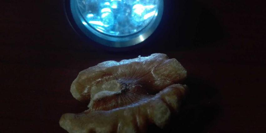 hersenen-walnoot-lamp