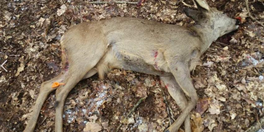 Politie en boswachters zijn loslopende honden meer dan zat