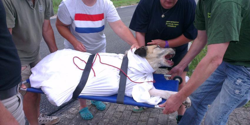 Hond breekt poot bij aanrijding op N201 bij Amstelhoek